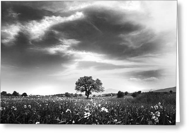 Field. Cloud Greeting Cards - Tree of Life Greeting Card by Ivan Vukelic