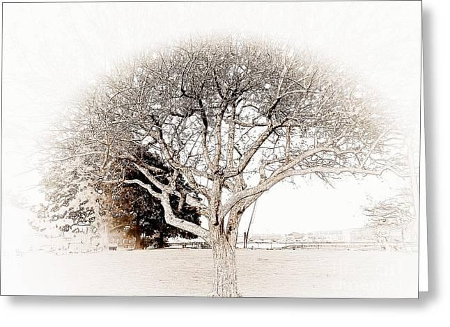 Prescott Greeting Cards - Tree of Life Greeting Card by Marcia Lee Jones
