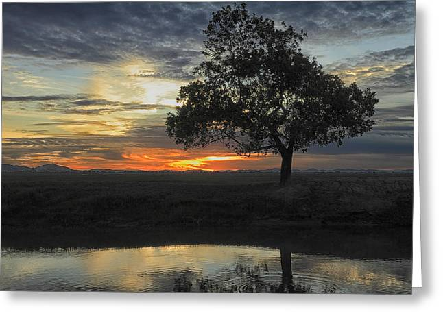 Reflection.etc Greeting Cards - Tree of life Greeting Card by Mark Anthony Bansag