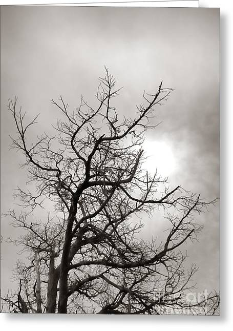Dead Tree Greeting Cards - Tree of Life Past Greeting Card by Olivier Le Queinec
