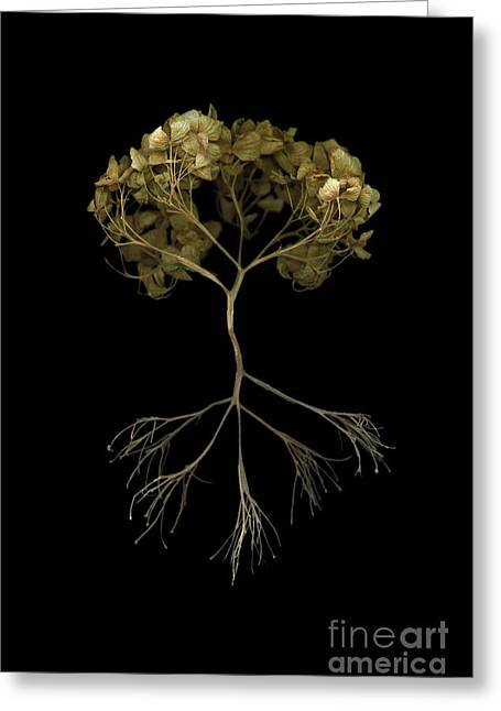 Tree Roots Mixed Media Greeting Cards - Tree of life Greeting Card by Tim Kravel