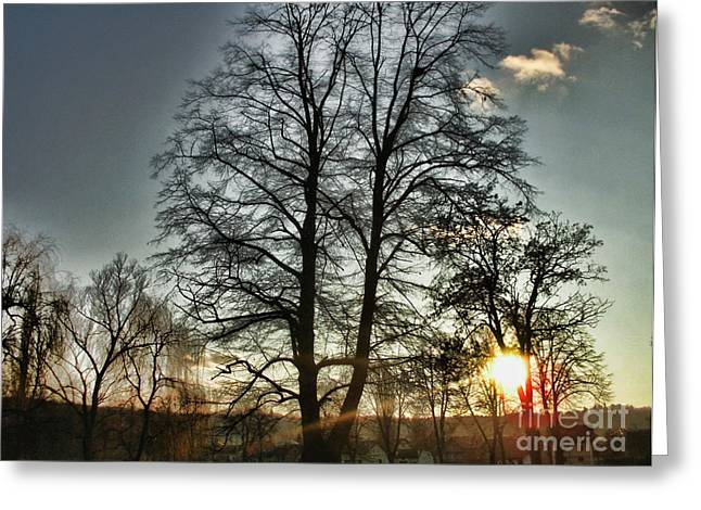 Gloaming Greeting Cards - Tree Of Light Greeting Card by Nina Ficur Feenan