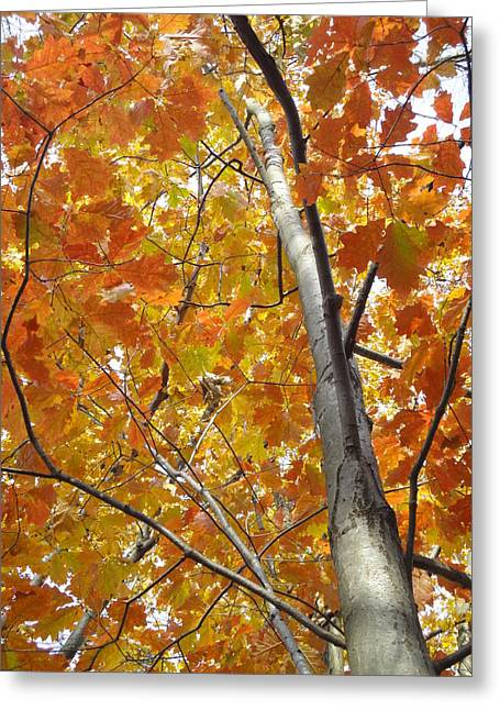 Guy Ricketts Photography Greeting Cards - Tree of Orange Greeting Card by Guy Ricketts