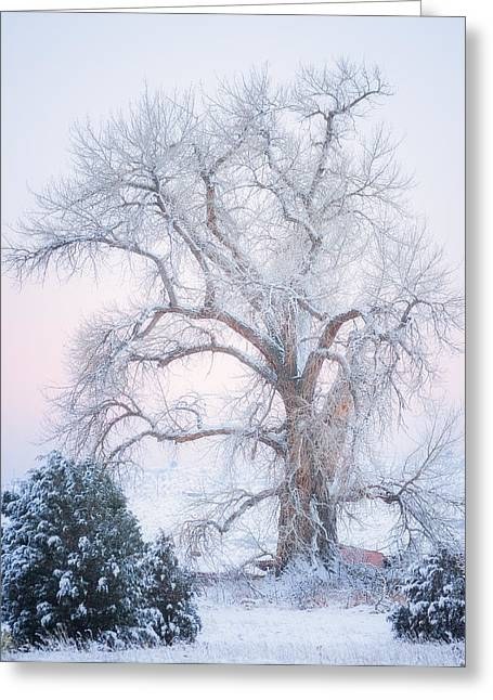Winter Scene Photographs Greeting Cards - Tree of Snow Greeting Card by Darren  White