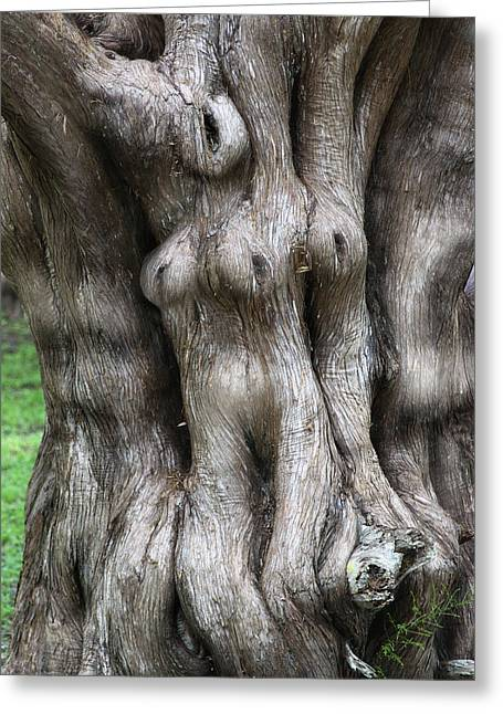 Agonized Greeting Cards - Tree of Souls Greeting Card by Martin Sullivan