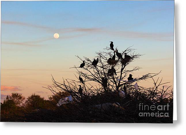 Moonrise Greeting Cards - Tree of Wildlife Greeting Card by Michelle Wiarda
