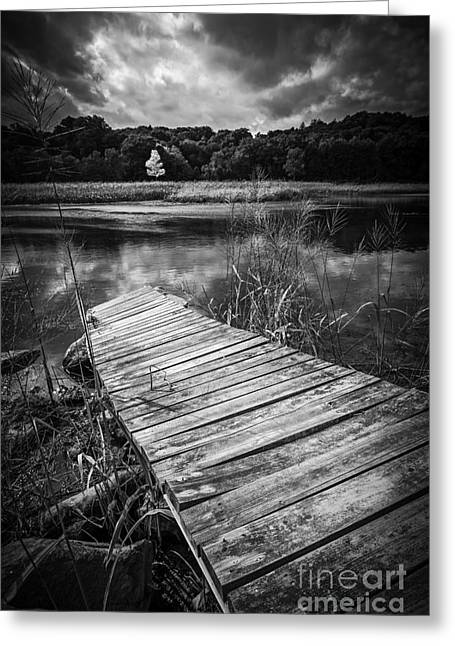 Wetland Greeting Cards - Tree of Zen Black and White Greeting Card by Edward Fielding