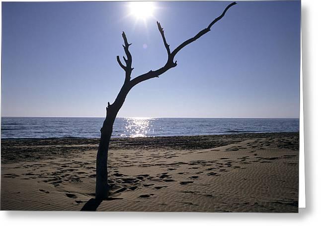Dead Tree Trunk Greeting Cards - Tree on a beach Greeting Card by Bernard Jaubert