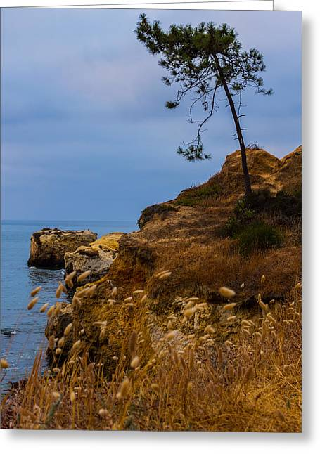 Oceanic Landscape Greeting Cards - Tree On A Cliff II Greeting Card by Marco Oliveira