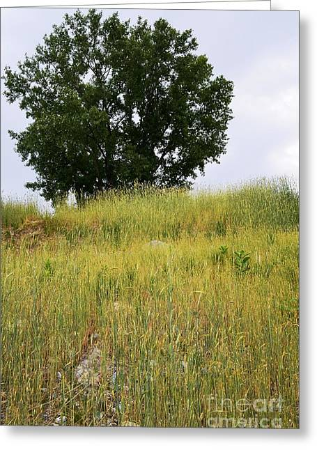 Esem8chart.com Greeting Cards - Tree on a Hill Greeting Card by Sarah Holenstein