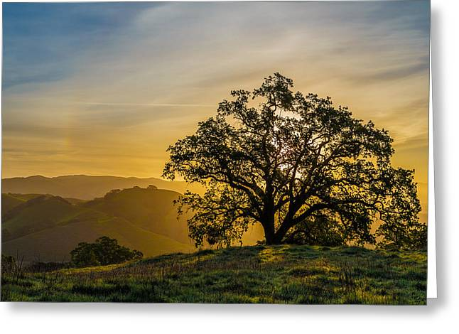 Sunset Tree Greeting Cards - Tree on a ridge Greeting Card by Sarit Sotangkur