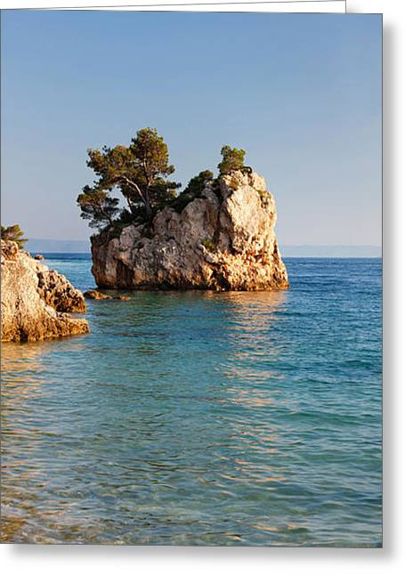 Adriatic Sea Greeting Cards - Tree On A Rock In The Sea, Brela Greeting Card by Panoramic Images
