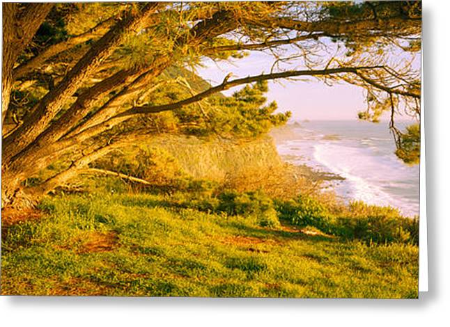 Big Sur Greeting Cards - Tree On The Coast, Big Sur, California Greeting Card by Panoramic Images