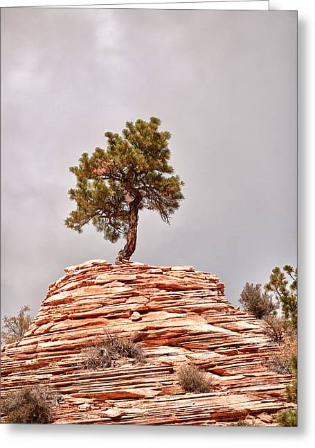 Geology Photographs Greeting Cards - Tree on the Roof Greeting Card by Juan Carlos Diaz Parra