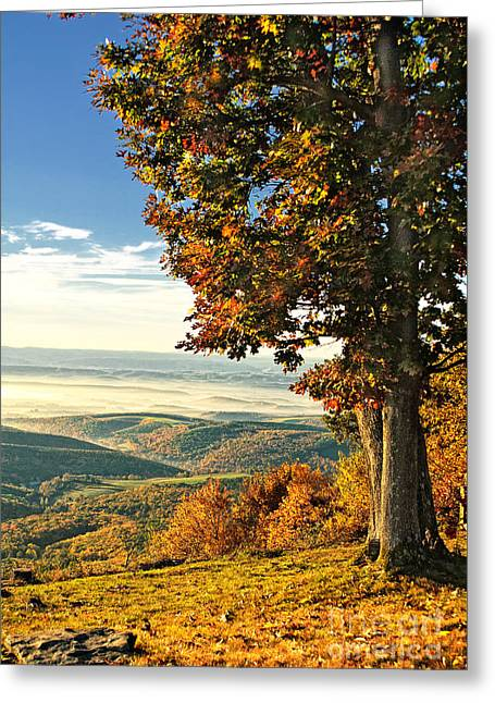 Bedford Hills Greeting Cards - Tree Overlook Vista Landscape Greeting Card by Timothy Flanigan
