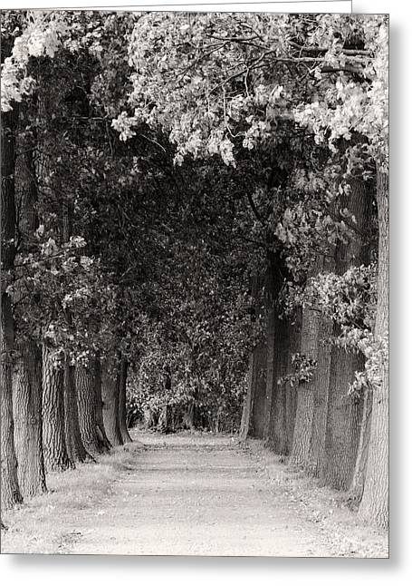 Ground Greeting Cards - Greeted by Trees Greeting Card by Wim Lanclus