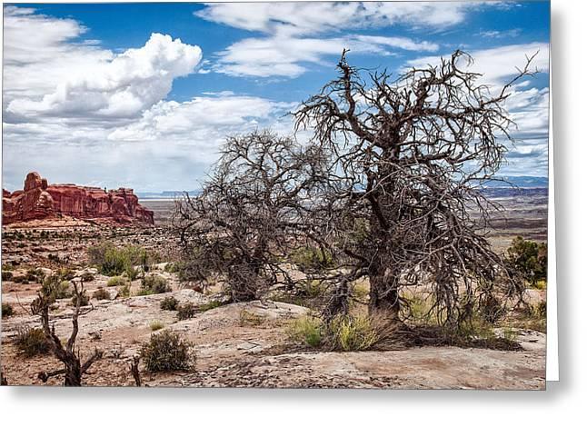Utah Pyrography Greeting Cards - Tree  Greeting Card by R Steven Diaz