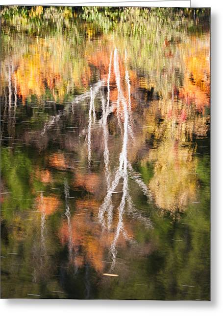 Connecticut River Greeting Cards - Tree Reflection Greeting Card by Michael Blanchette