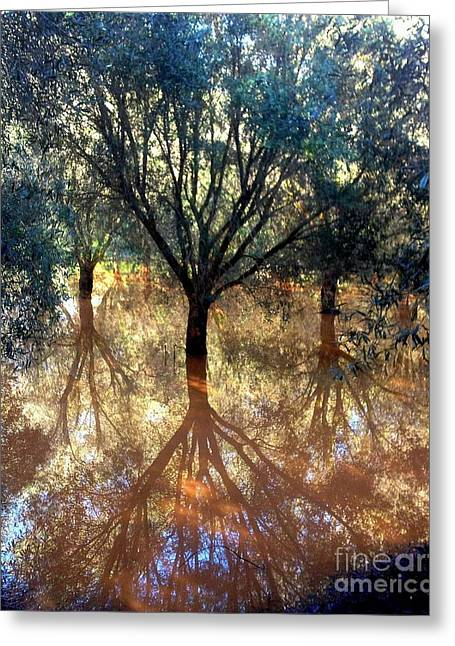 Most Favorite Photographs Greeting Cards - Tree Reflection Greeting Card by Noa Yerushalmi