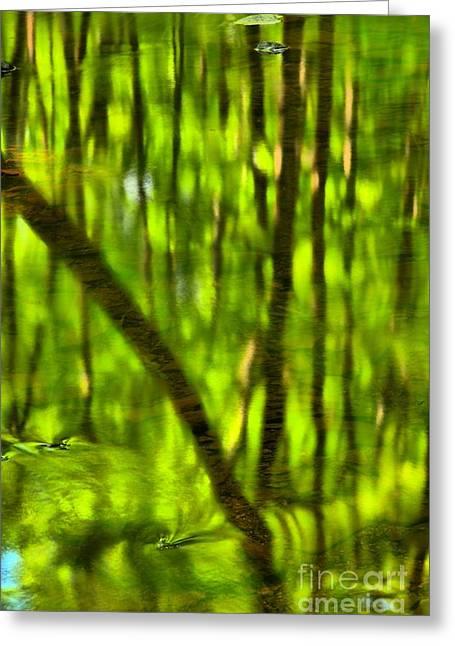 Hells Run Creek Greeting Cards - Tree Reflections Greeting Card by Adam Jewell