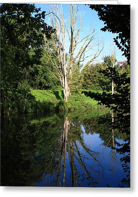 Reflections In River Greeting Cards - Tree Reflections Greeting Card by Aidan Moran