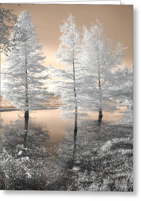Couer Greeting Cards - Tree Reflections Greeting Card by Jane Linders