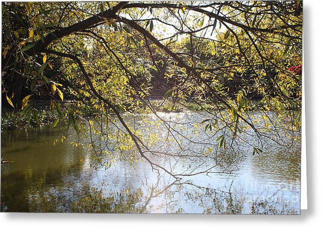 Art In Acrylic Greeting Cards - Tree Reflecting Off Lake Greeting Card by John Telfer