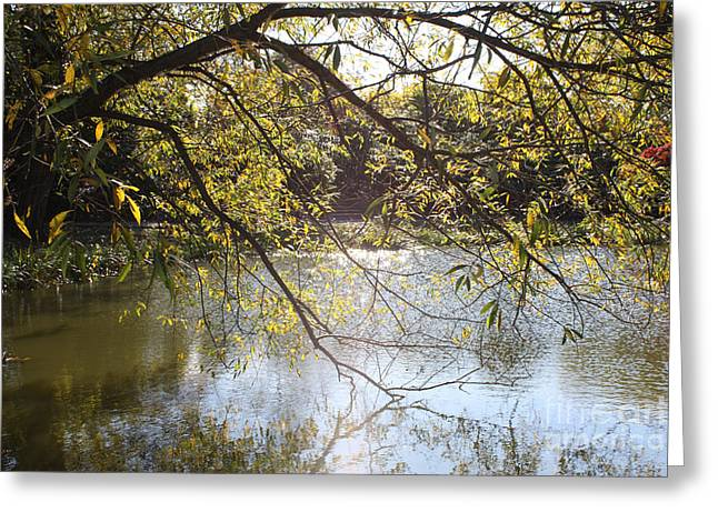 Botanical Greeting Cards - Tree Reflecting Off Lake Greeting Card by John Telfer