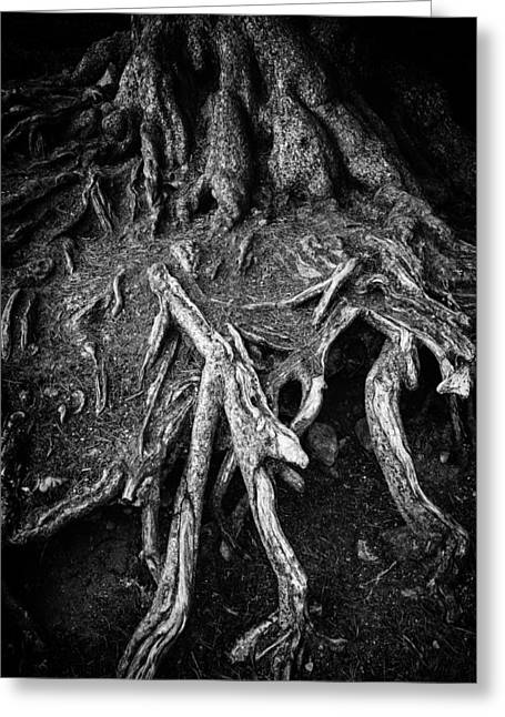 Tree Roots Black And White Greeting Card by Matthias Hauser