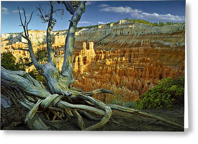 Tree Roots On A Ridge In Bryce Canyon Greeting Card by Randall Nyhof