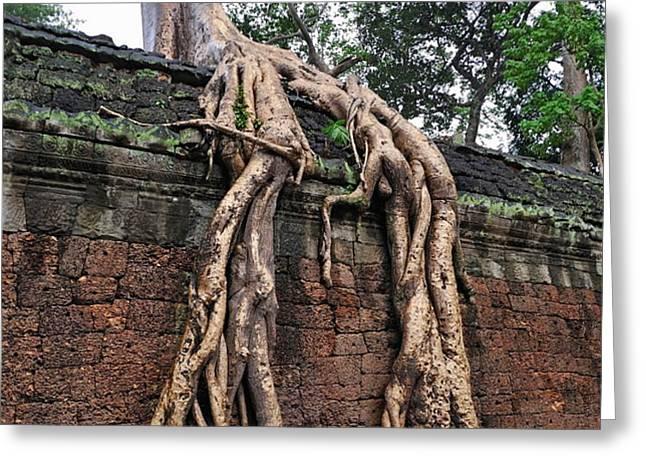 Tree roots on ruins at Angkor Wat Greeting Card by Sami Sarkis
