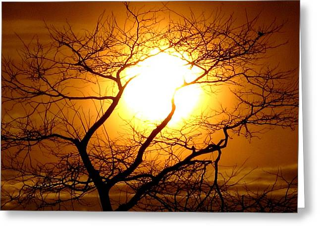 04003 Greeting Cards - Tree Set Greeting Card by Donnie Freeman