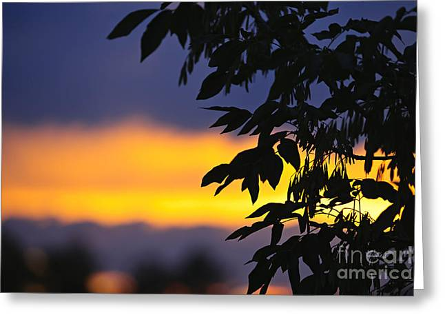Yellow Leaves Photographs Greeting Cards - Tree silhouette over sunset Greeting Card by Elena Elisseeva