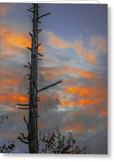 Unset Greeting Cards - Tree Silhouette Greeting Card by Paul Freidlund