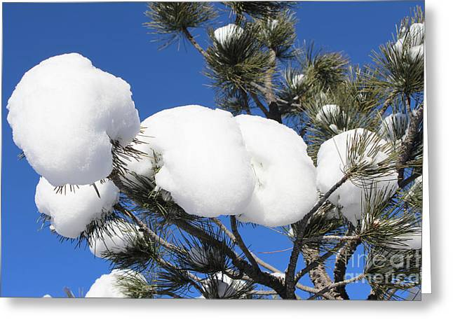 Green Day Greeting Cards - Tree Snowballs Greeting Card by Steven Parker