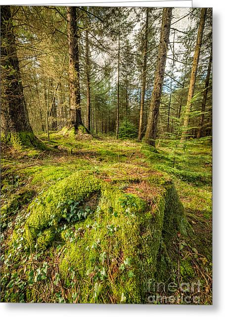 Tree Stump Greeting Cards - Tree Stump Greeting Card by Adrian Evans