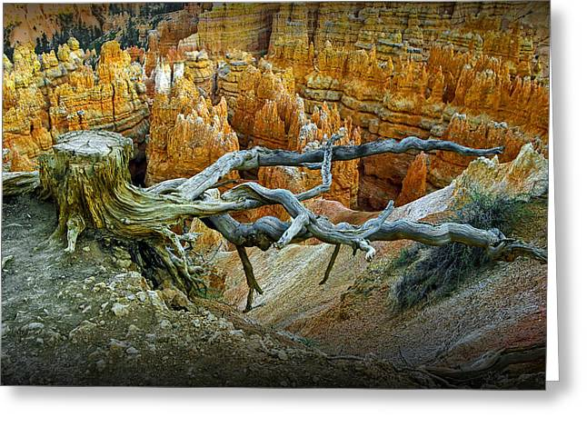 Tent Rocks Canyon Greeting Cards - Tree stump on a ridge in Bryce National Canyon Greeting Card by Randall Nyhof