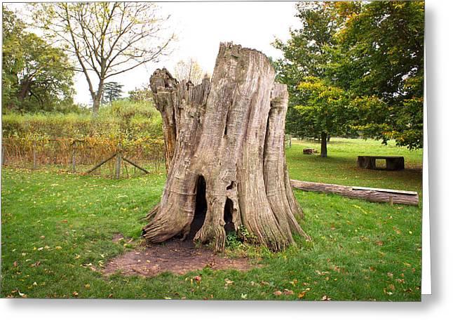 Dead Tree Trunk Greeting Cards - Tree stump Greeting Card by Tom Gowanlock