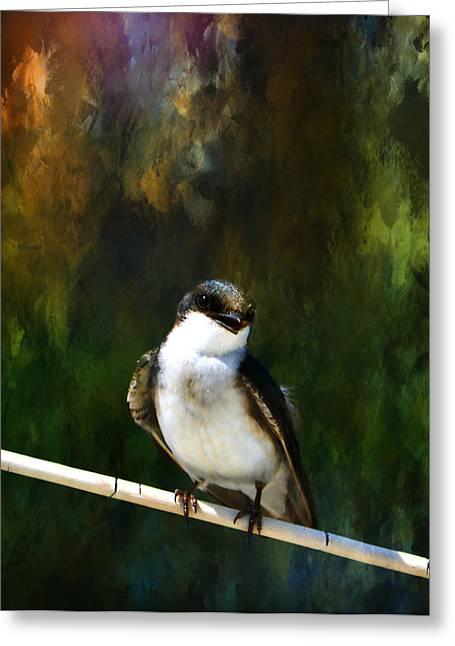 Lifeline Greeting Cards - Tree Swallow Greeting Card by Deena Stoddard