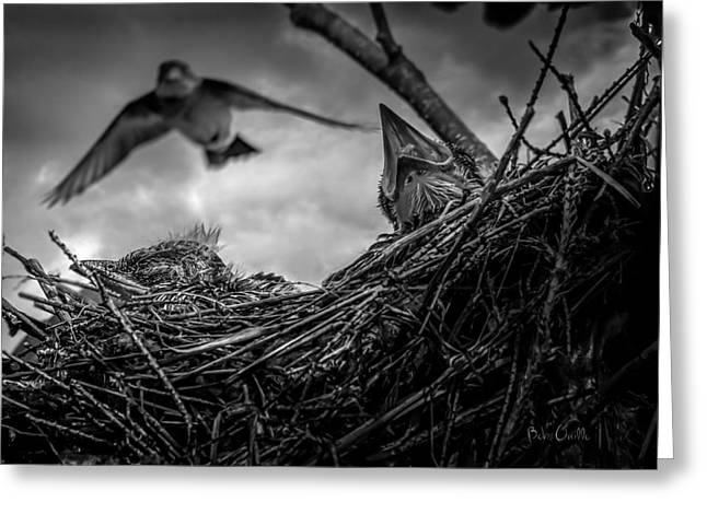 Fledglings Greeting Cards - Tree Swallows in nest Greeting Card by Bob Orsillo