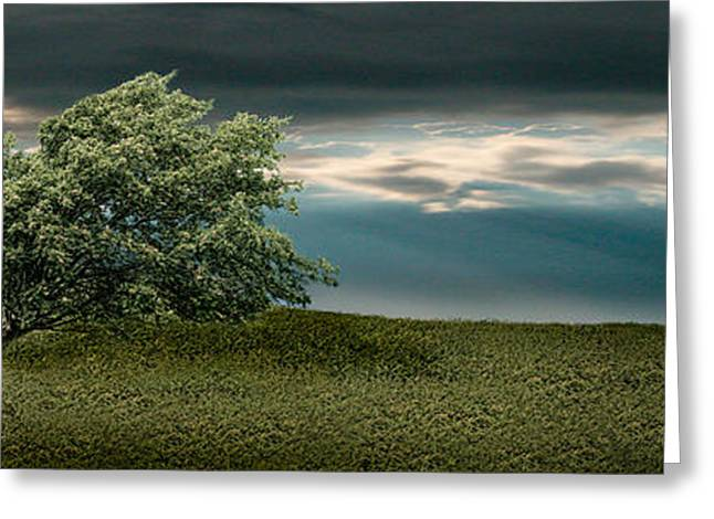 Color Bending Greeting Cards - Tree Swaying In Storm Greeting Card by Panoramic Images