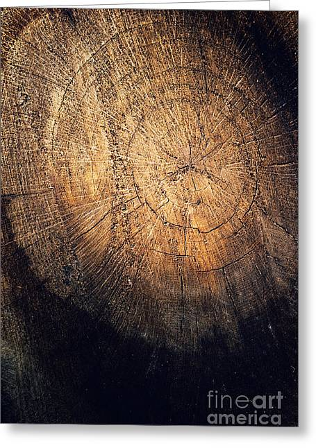 Mythja Greeting Cards - Tree texture background Greeting Card by Mythja  Photography