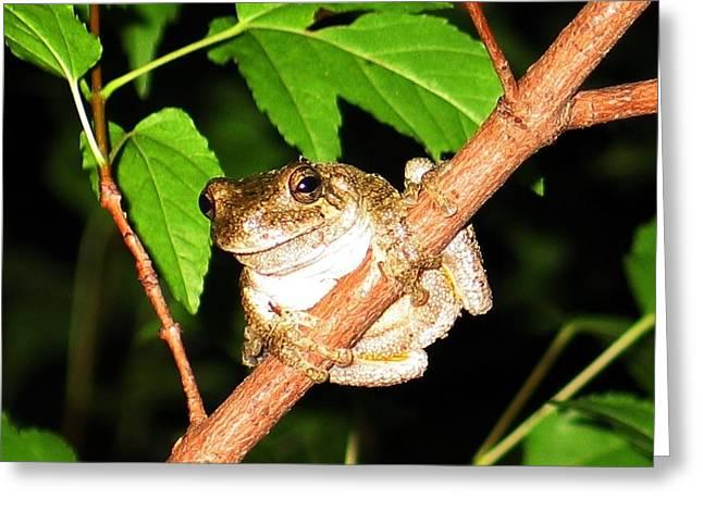 Tree Toad Night Greeting Card by Tamara Stickler