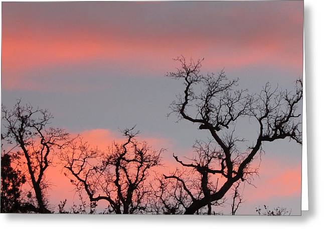 Tree Tops  Greeting Card by Debra Madonna
