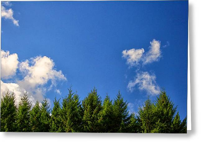 Fir Trees Greeting Cards - Tree Tops Greeting Card by Nomad Art And  Design