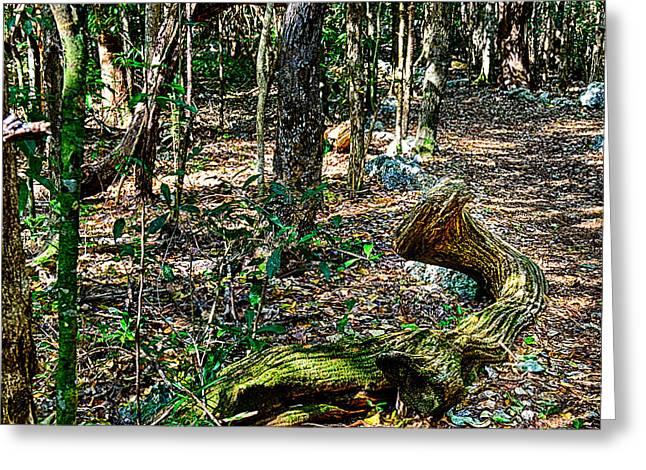Florida Keys Greeting Cards - Tree Trunk Along the Trail Greeting Card by Vaughn Garner
