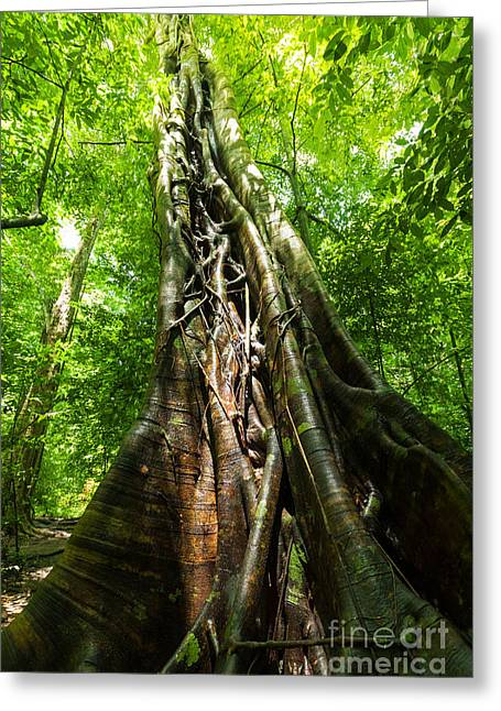 Deep Forest Greeting Cards - Tree Trunk Greeting Card by Atiketta Sangasaeng