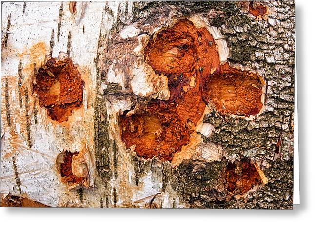 Warm Tones Greeting Cards - Tree trunk closeup - wooden structure Greeting Card by Matthias Hauser