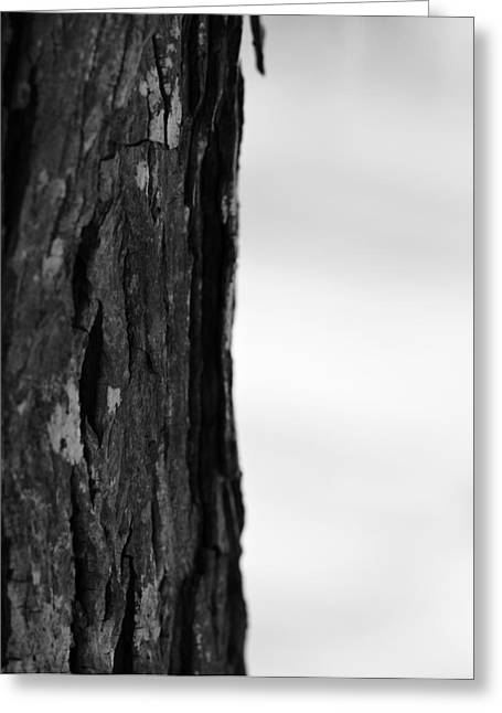 Trees In Winter Greeting Cards - Tree Trunk In Winter Black And White Greeting Card by Dan Sproul