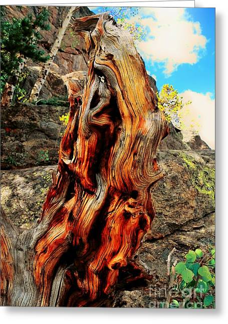 Struckle Greeting Cards - Tree Trunk Greeting Card by Kathleen Struckle